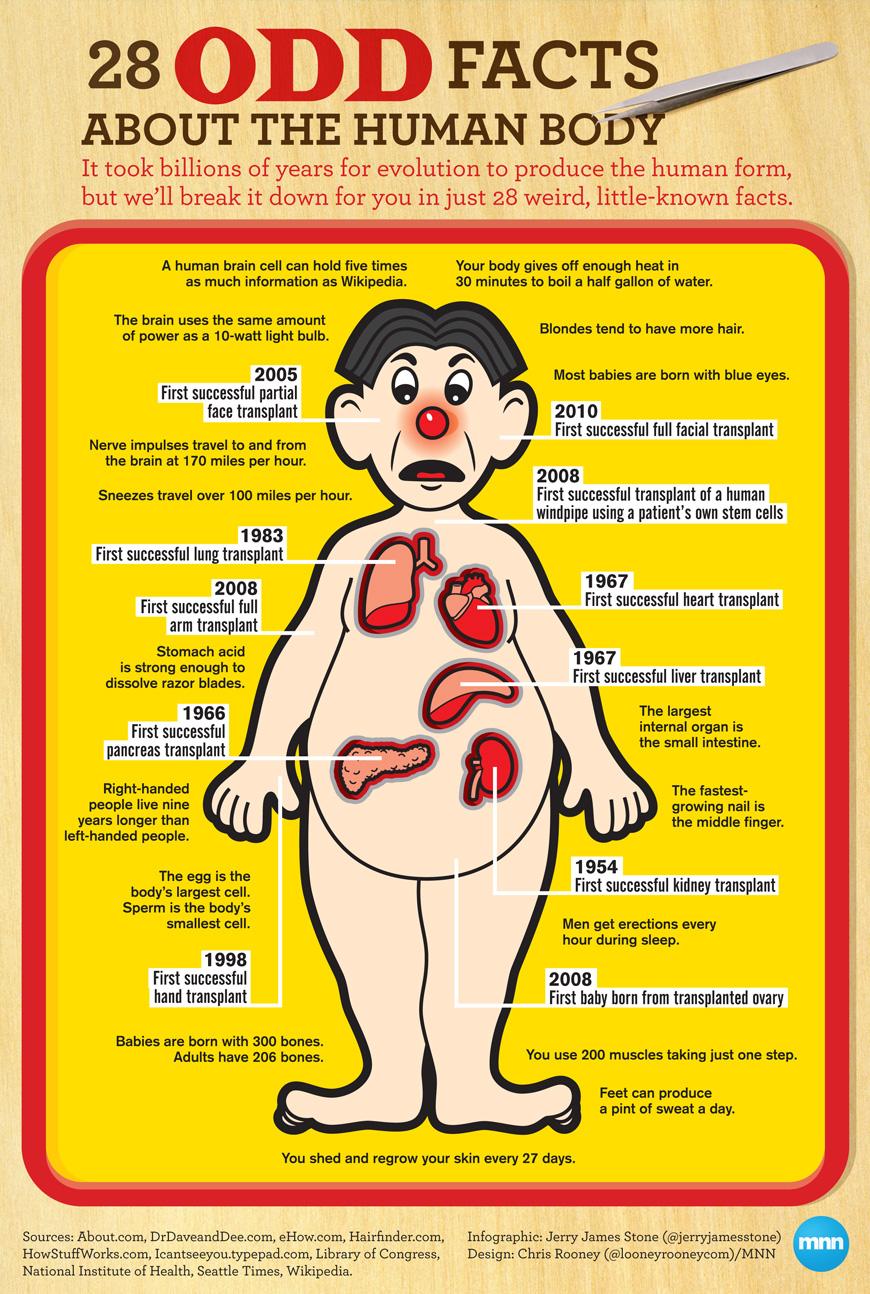 28 fatti curiosi sul corpo umano - infografica